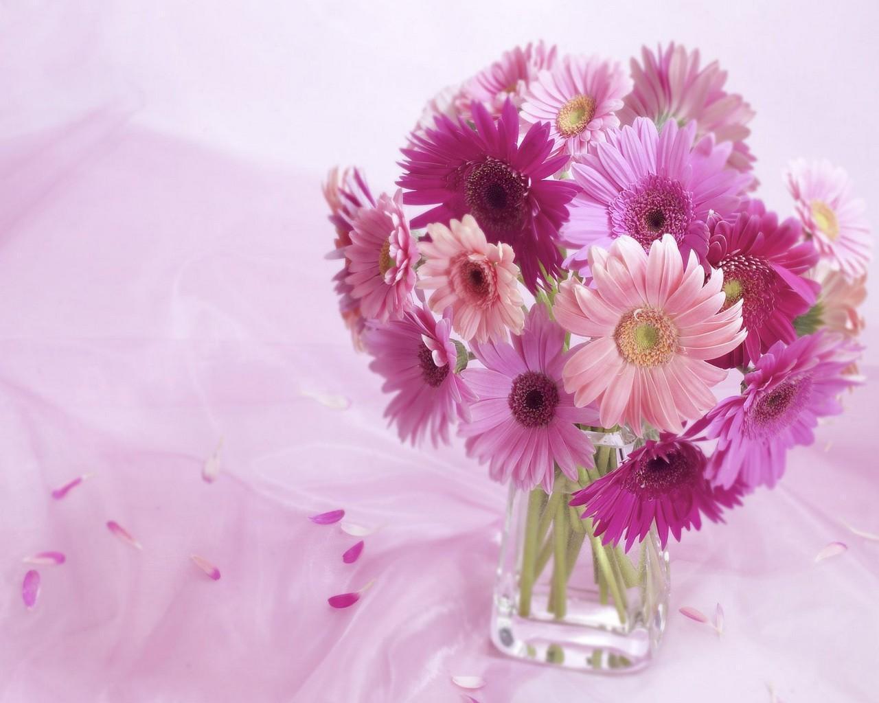 10021 descargar fondo de pantalla Plantas, Flores, Violeta: protectores de pantalla e imágenes gratis