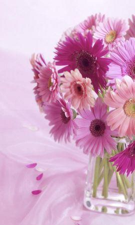 10021 скачать обои Растения, Цветы - заставки и картинки бесплатно