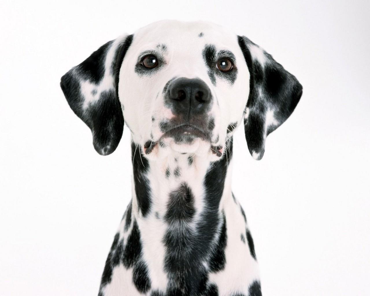 22502 скачать обои Животные, Собаки - заставки и картинки бесплатно
