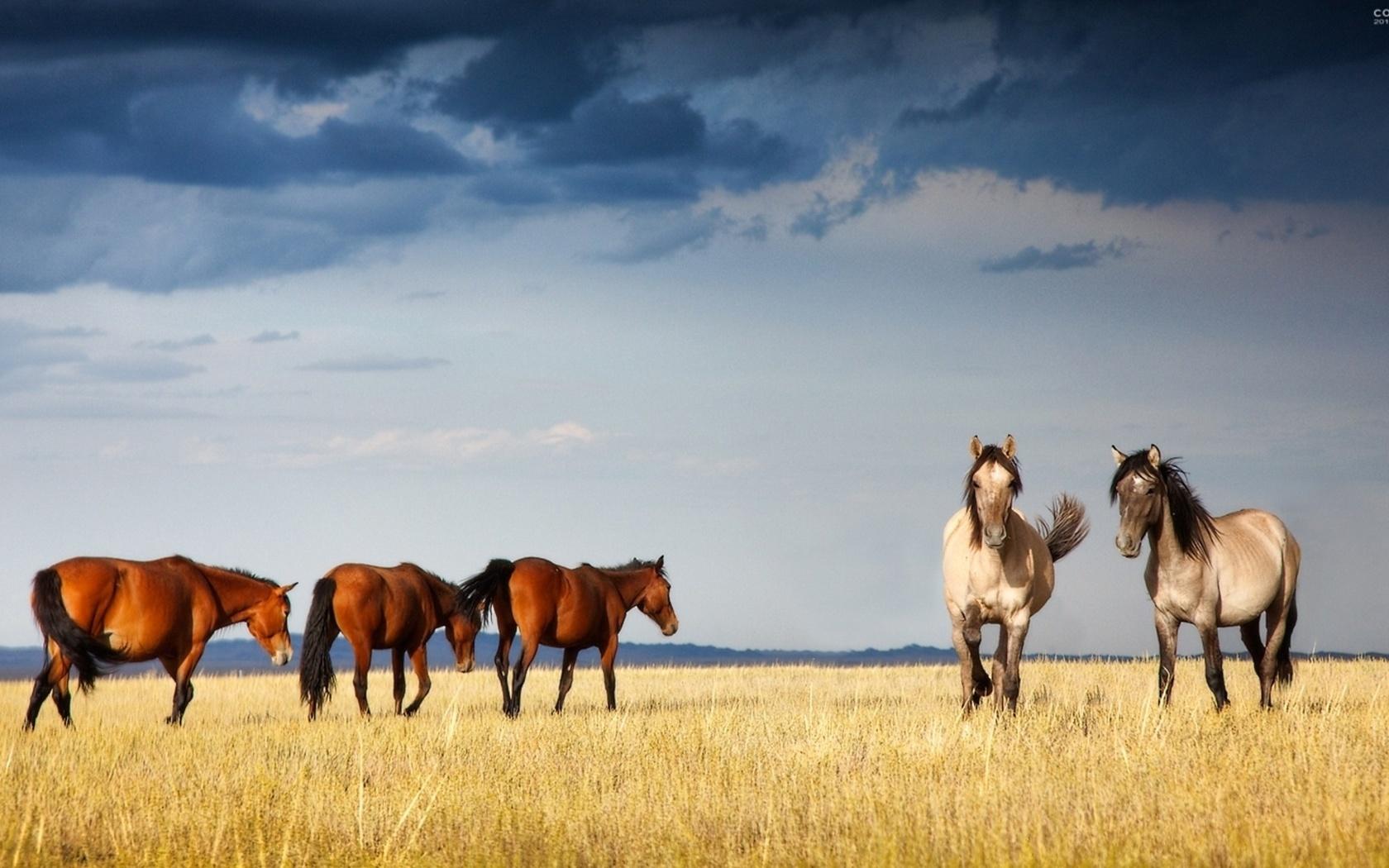 46073 скачать обои Животные, Пейзаж, Лошади - заставки и картинки бесплатно