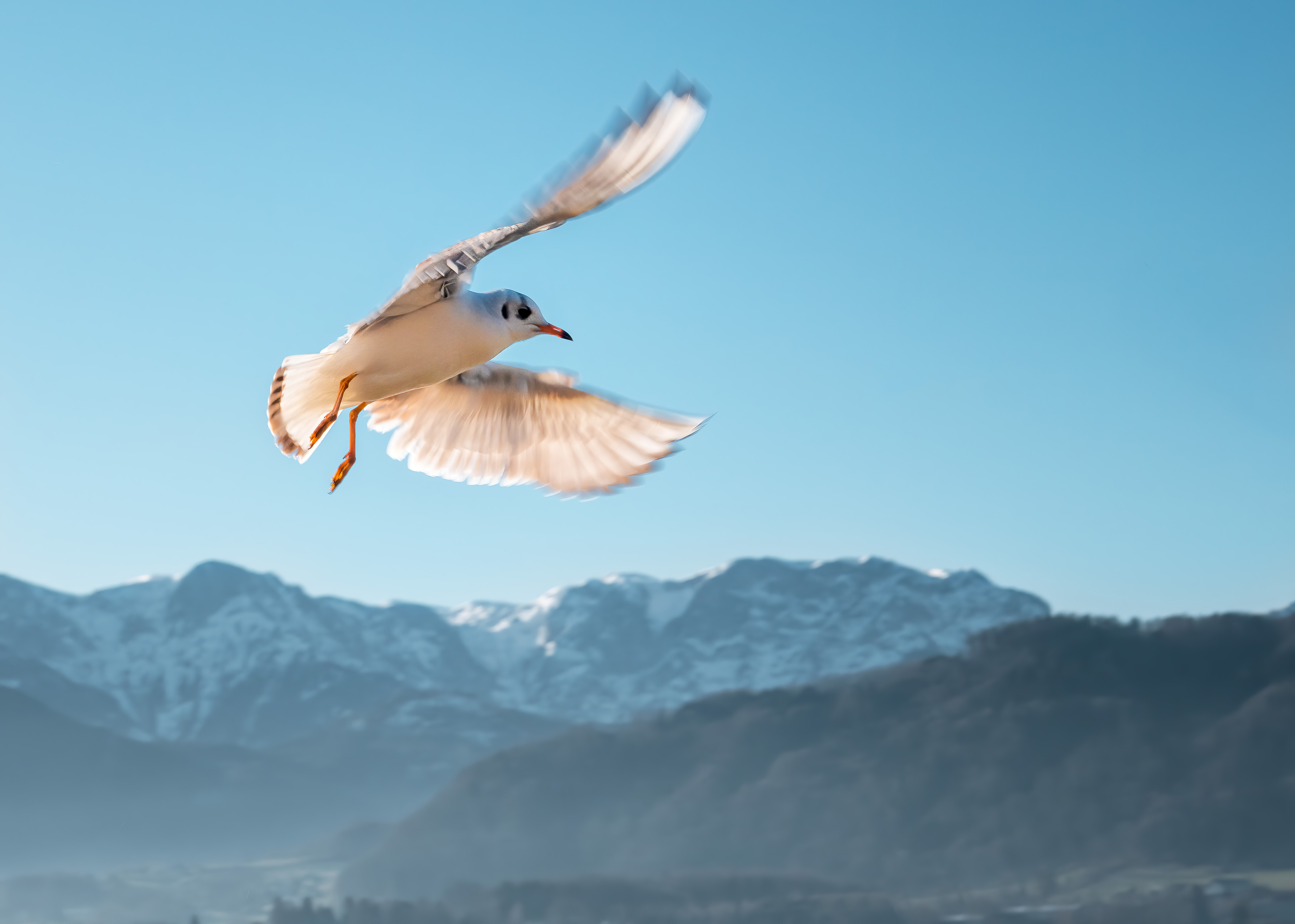 51793 download wallpaper Animals, Gull, Seagull, Bird, Flight, Sky, Mountains screensavers and pictures for free