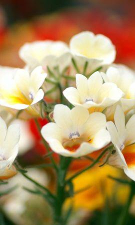 47102 baixar papel de parede Plantas, Flores - protetores de tela e imagens gratuitamente