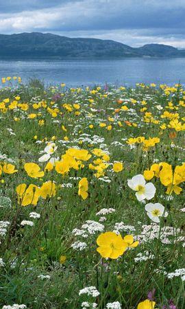 35713 скачать обои Пейзаж, Цветы, Река - заставки и картинки бесплатно