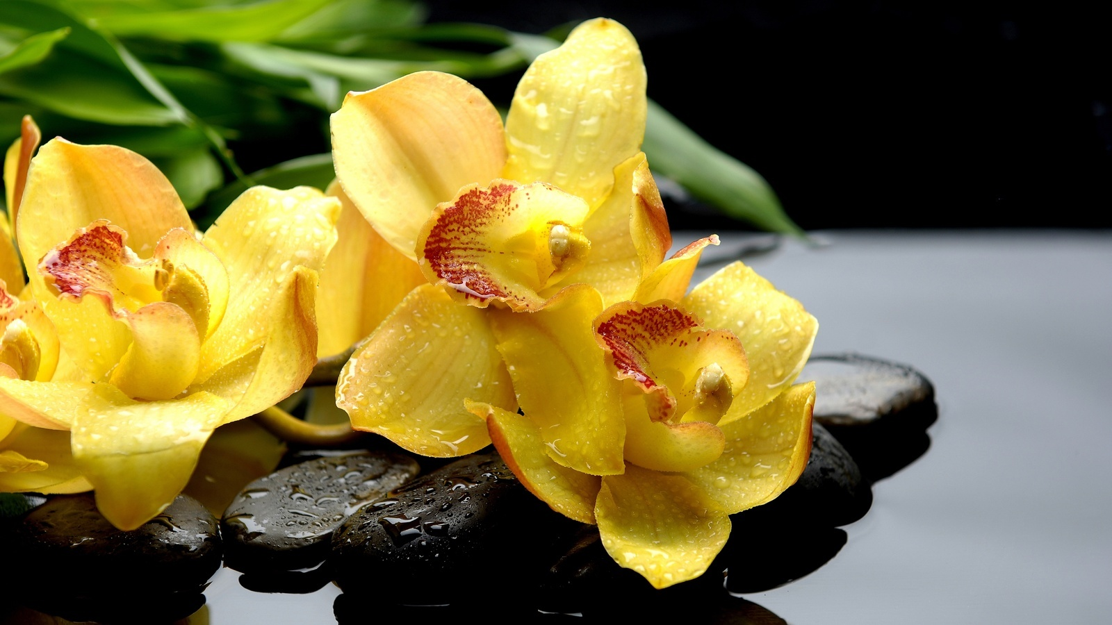 20833 download wallpaper Plants, Flowers, Drops screensavers and pictures for free