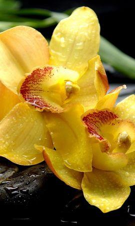 20833 descargar fondo de pantalla Plantas, Flores, Drops: protectores de pantalla e imágenes gratis