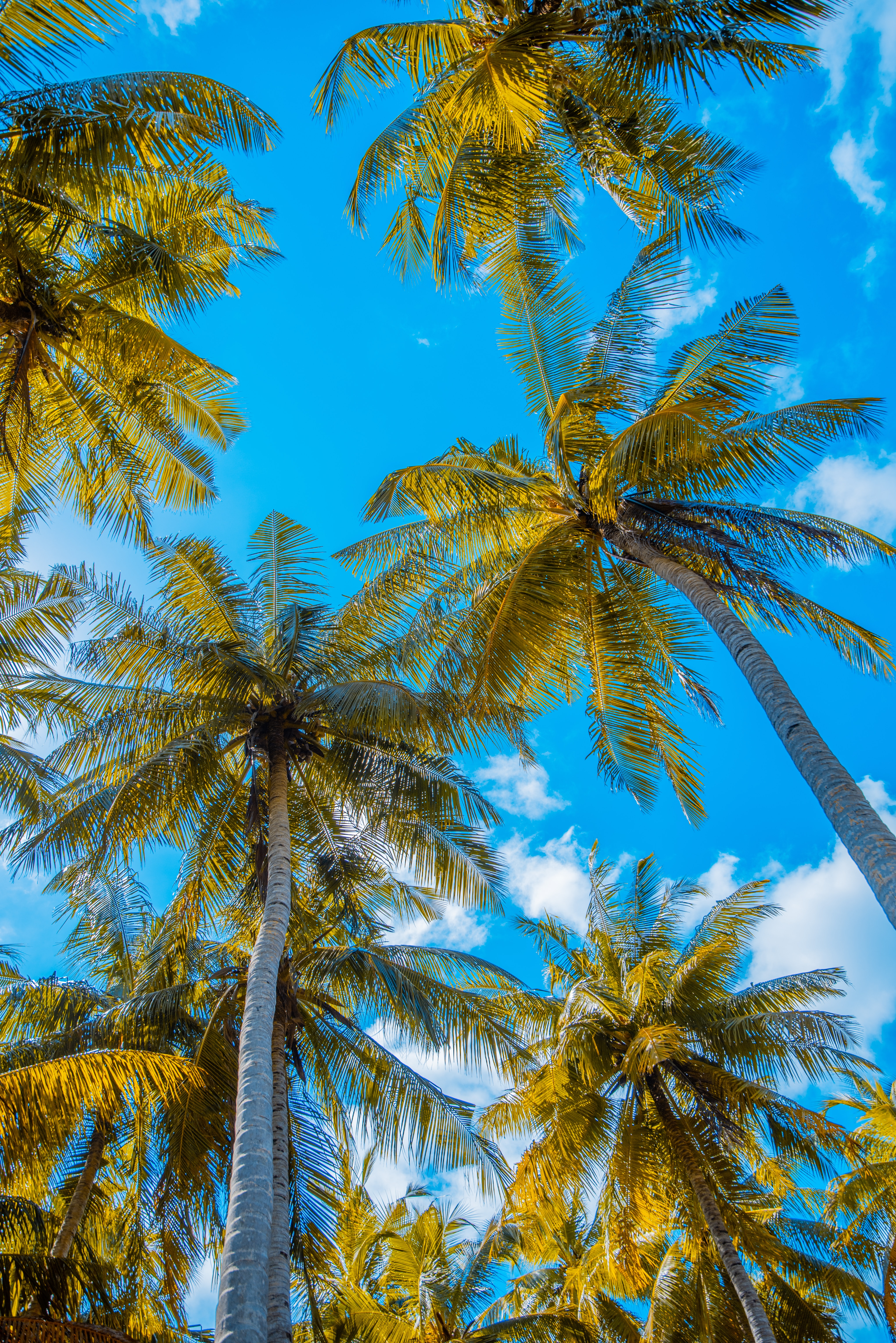 55934 download wallpaper Nature, Sky, Clouds, Tropics, Summer, Palms screensavers and pictures for free