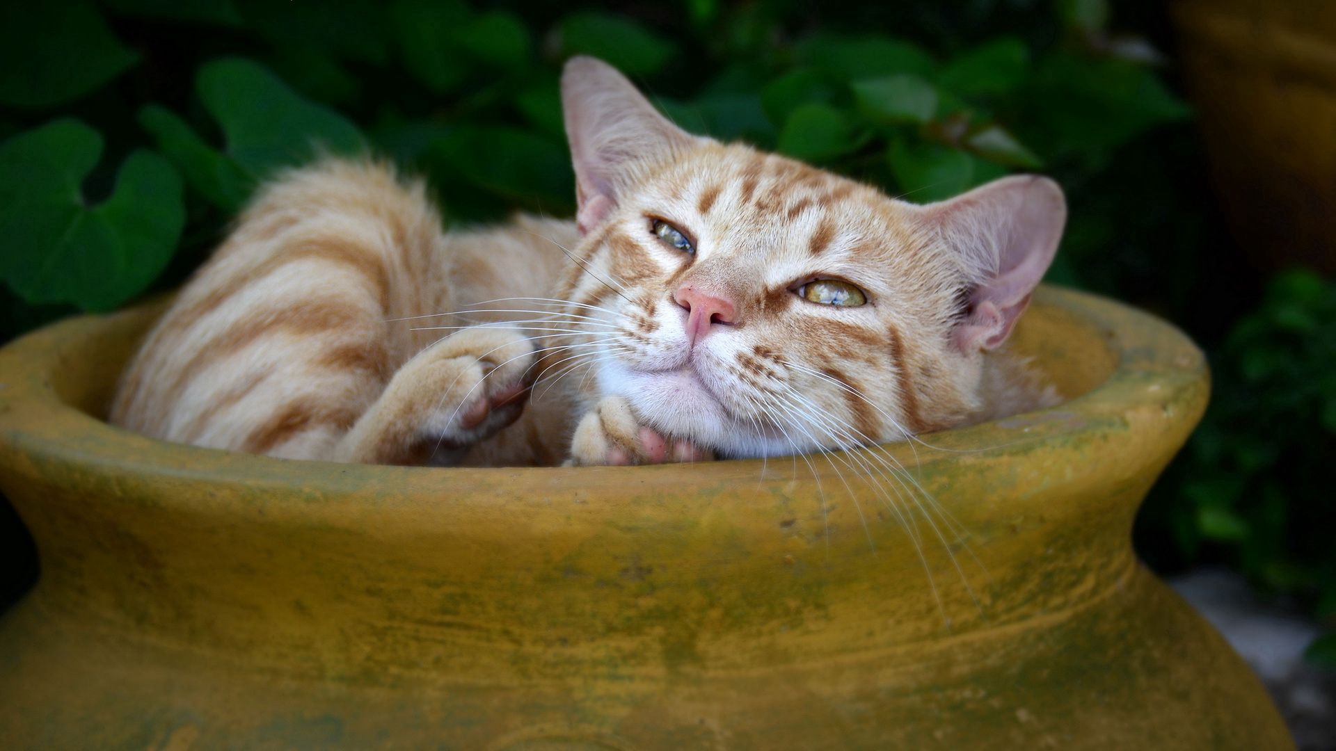 156945 download wallpaper Animals, Cat, Redhead, Striped, Jug, To Lie Down, Lie screensavers and pictures for free
