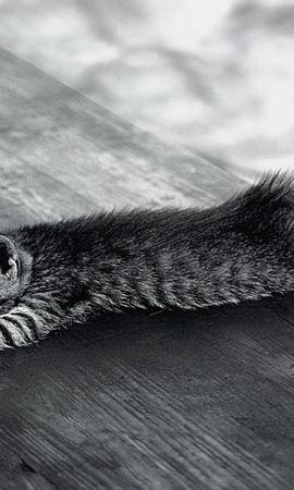 127968壁紙のダウンロード動物, キティ, 子猫, 睡眠, 夢, 疲れた, 横になります, 嘘-スクリーンセーバーと写真を無料で