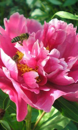 3750 descargar fondo de pantalla Plantas, Flores: protectores de pantalla e imágenes gratis