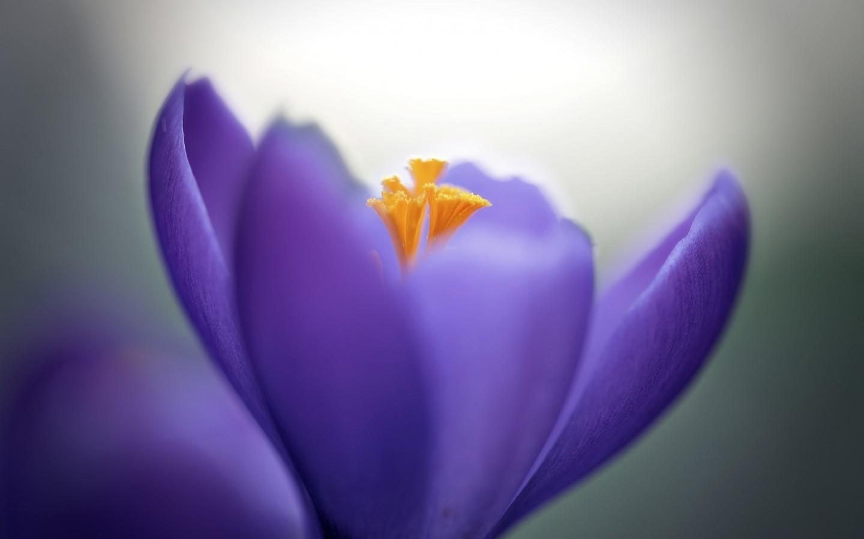 18574 скачать обои Растения, Цветы - заставки и картинки бесплатно