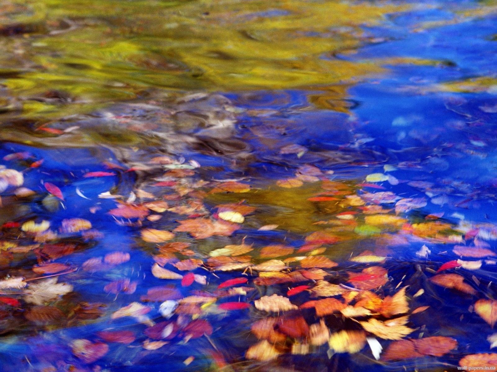 10778 скачать обои Пейзаж, Вода, Листья - заставки и картинки бесплатно