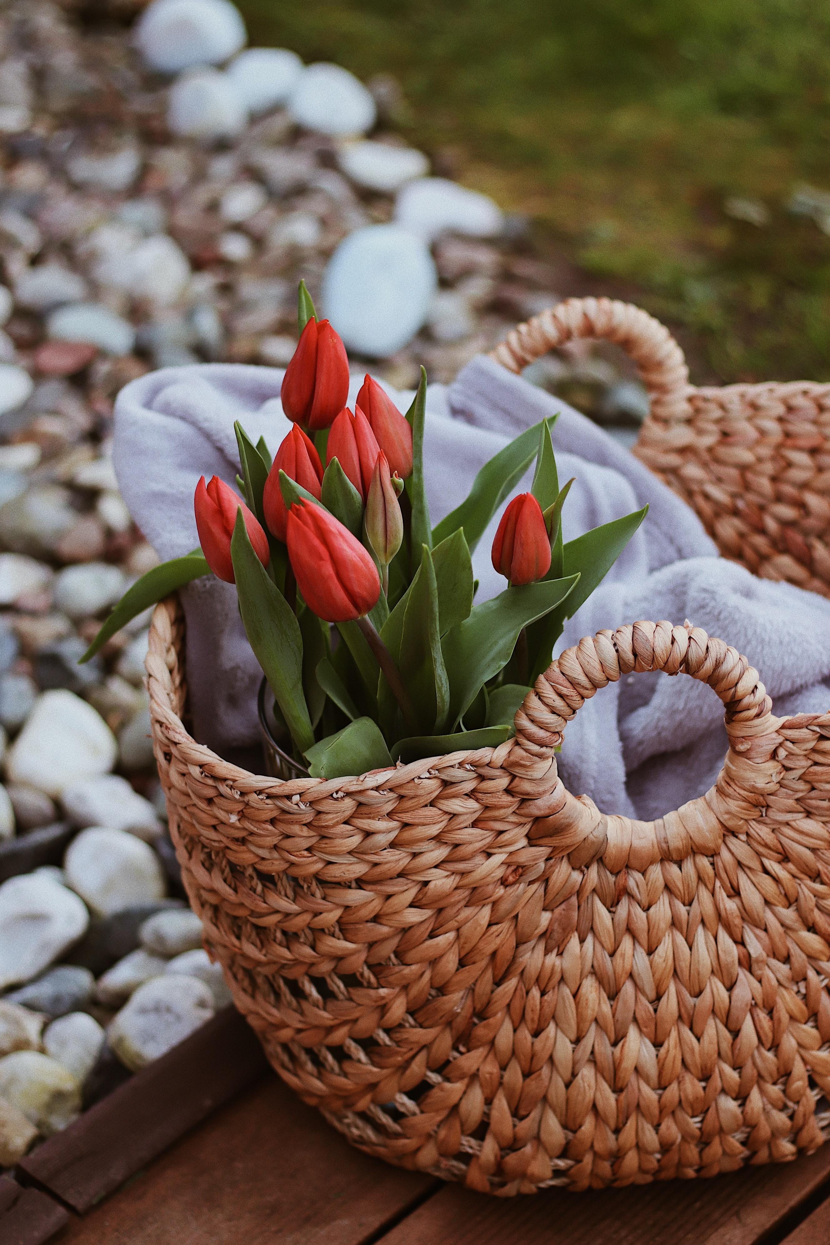 63902 скачать обои Букет, Цветы, Тюльпаны, Красный, Корзина - заставки и картинки бесплатно