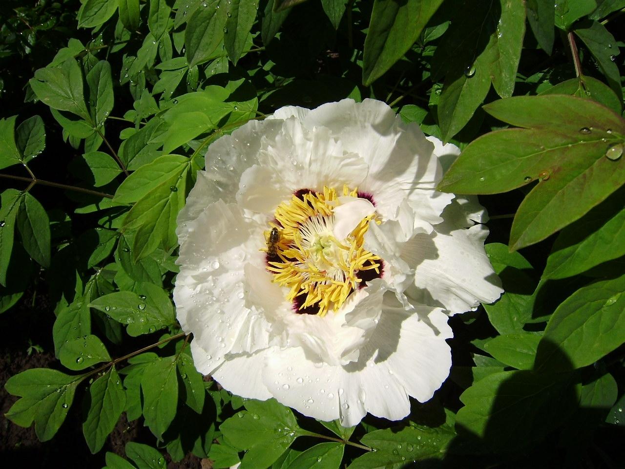 5246 скачать обои Растения, Цветы - заставки и картинки бесплатно