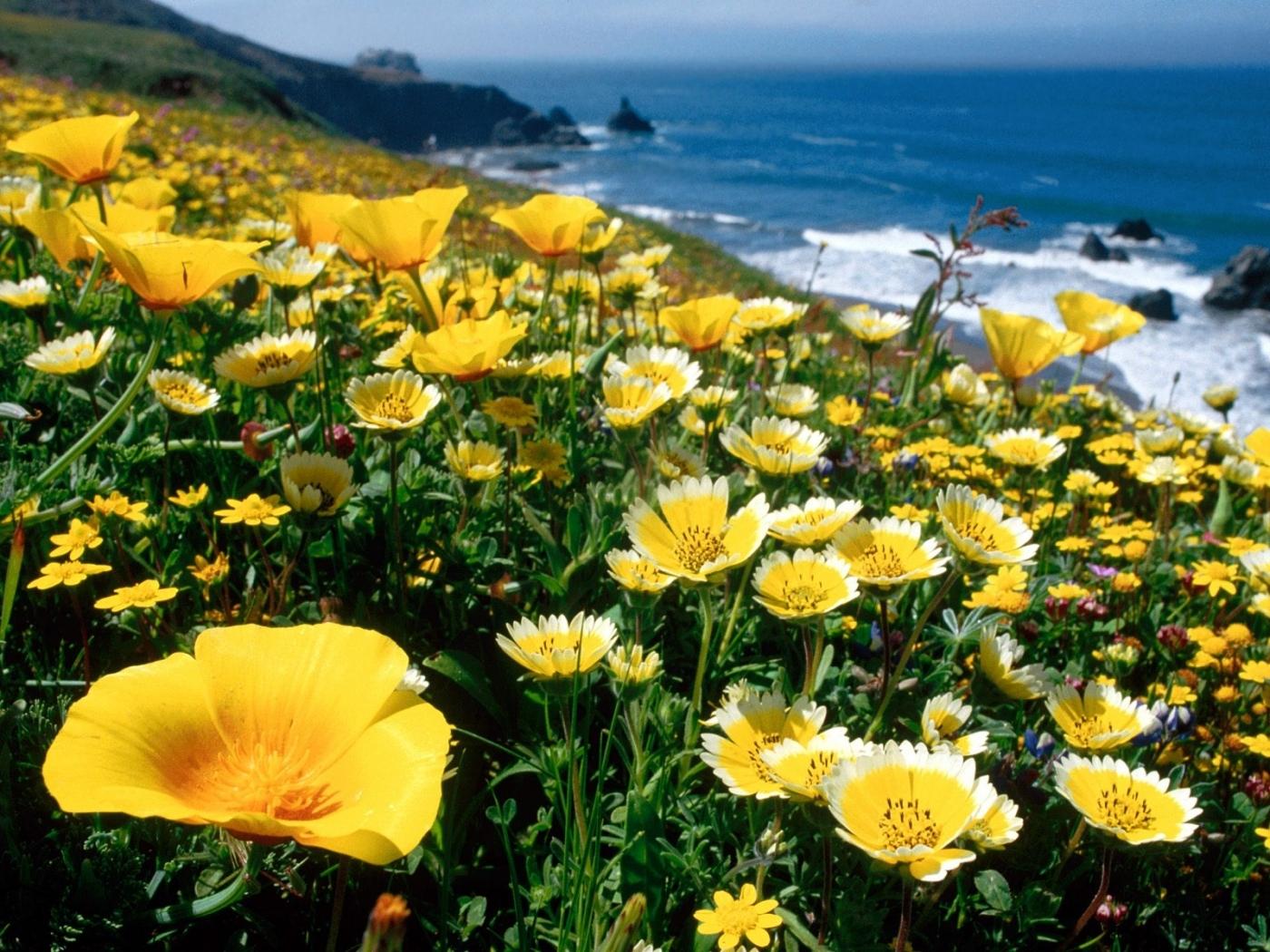 Handy-Wallpaper Pflanzen, Landschaft, Blumen kostenlos herunterladen.