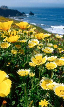 45392 télécharger le fond d'écran Plantes, Paysage, Fleurs - économiseurs d'écran et images gratuitement
