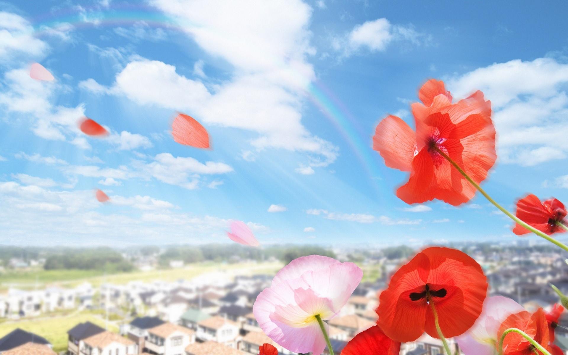1043 скачать обои Растения, Цветы, Небо, Маки - заставки и картинки бесплатно
