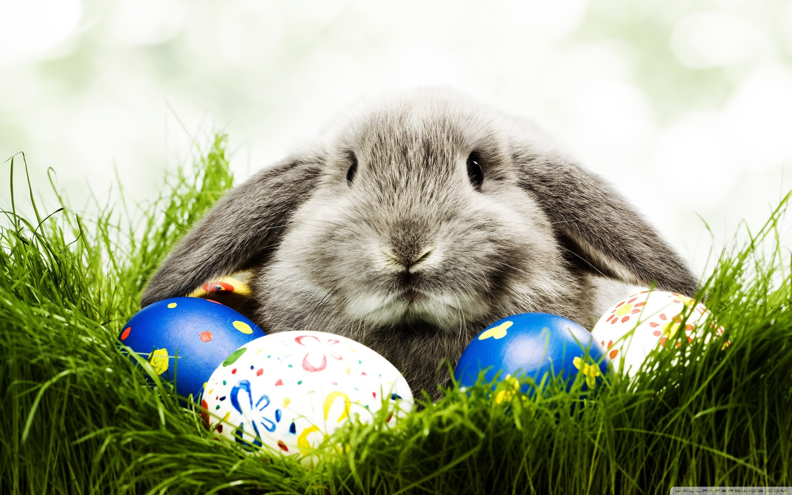 28500 download wallpaper Animals, Holidays, Easter, Rabbits screensavers and pictures for free