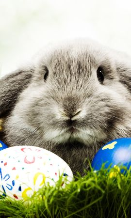 28500 download wallpaper Holidays, Animals, Easter, Rabbits screensavers and pictures for free