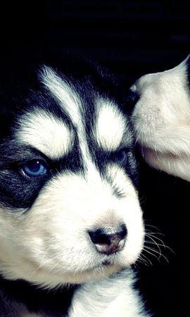 45994 baixar papel de parede Animais, Cães - protetores de tela e imagens gratuitamente