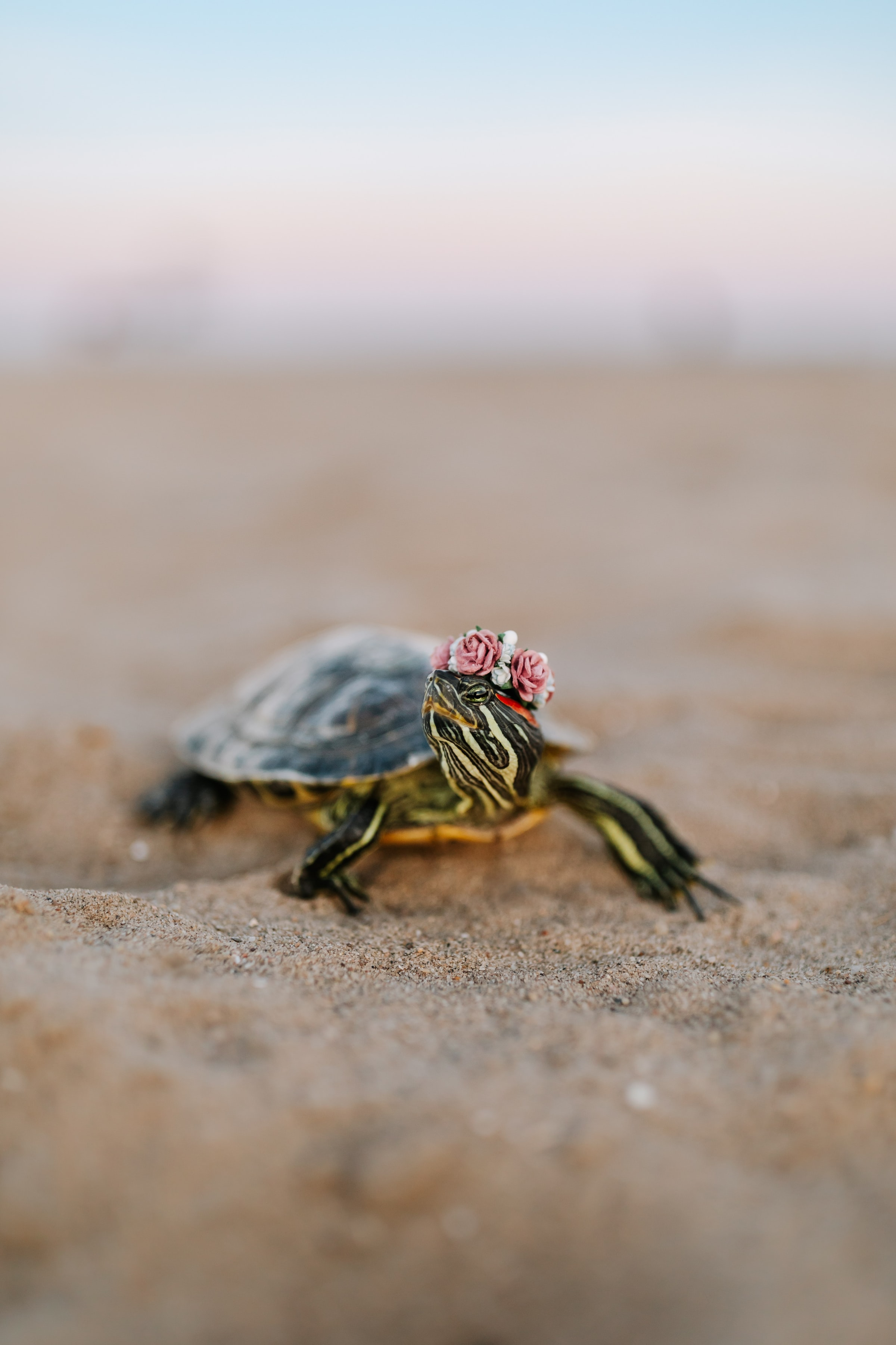 121326 download wallpaper Animals, Turtle, Carapace, Shell, Sand, Animal screensavers and pictures for free