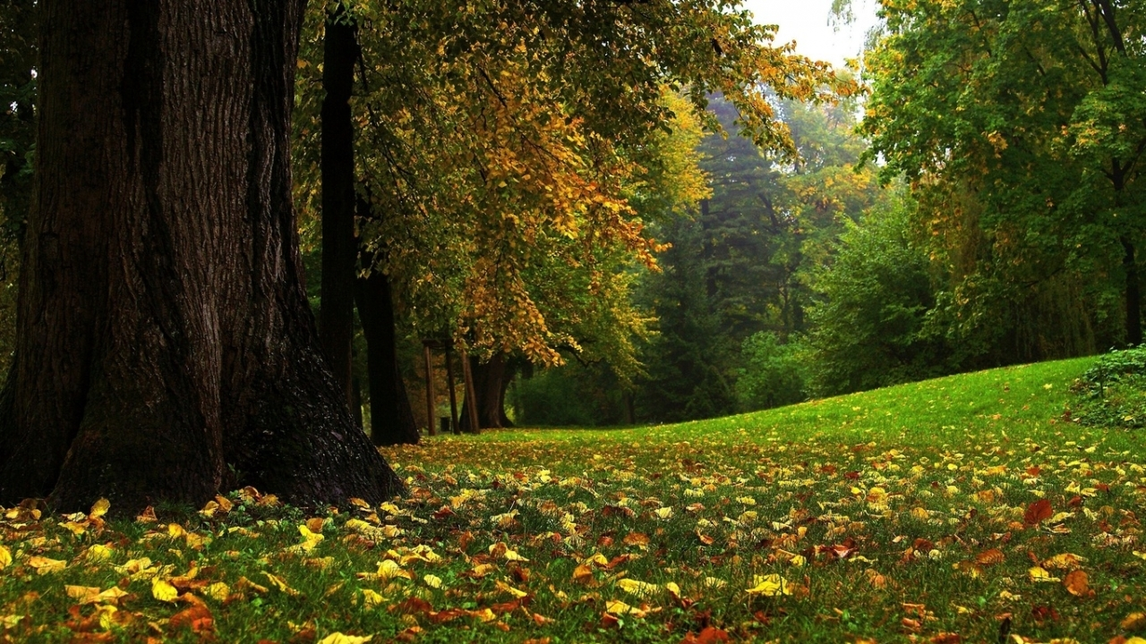 31818 download wallpaper Landscape, Trees, Autumn screensavers and pictures for free