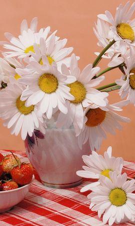 2864 скачать обои Растения, Цветы, Еда, Клубника, Ромашки - заставки и картинки бесплатно