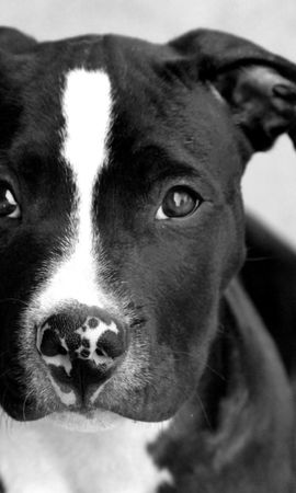 21374 download wallpaper Animals, Dogs screensavers and pictures for free