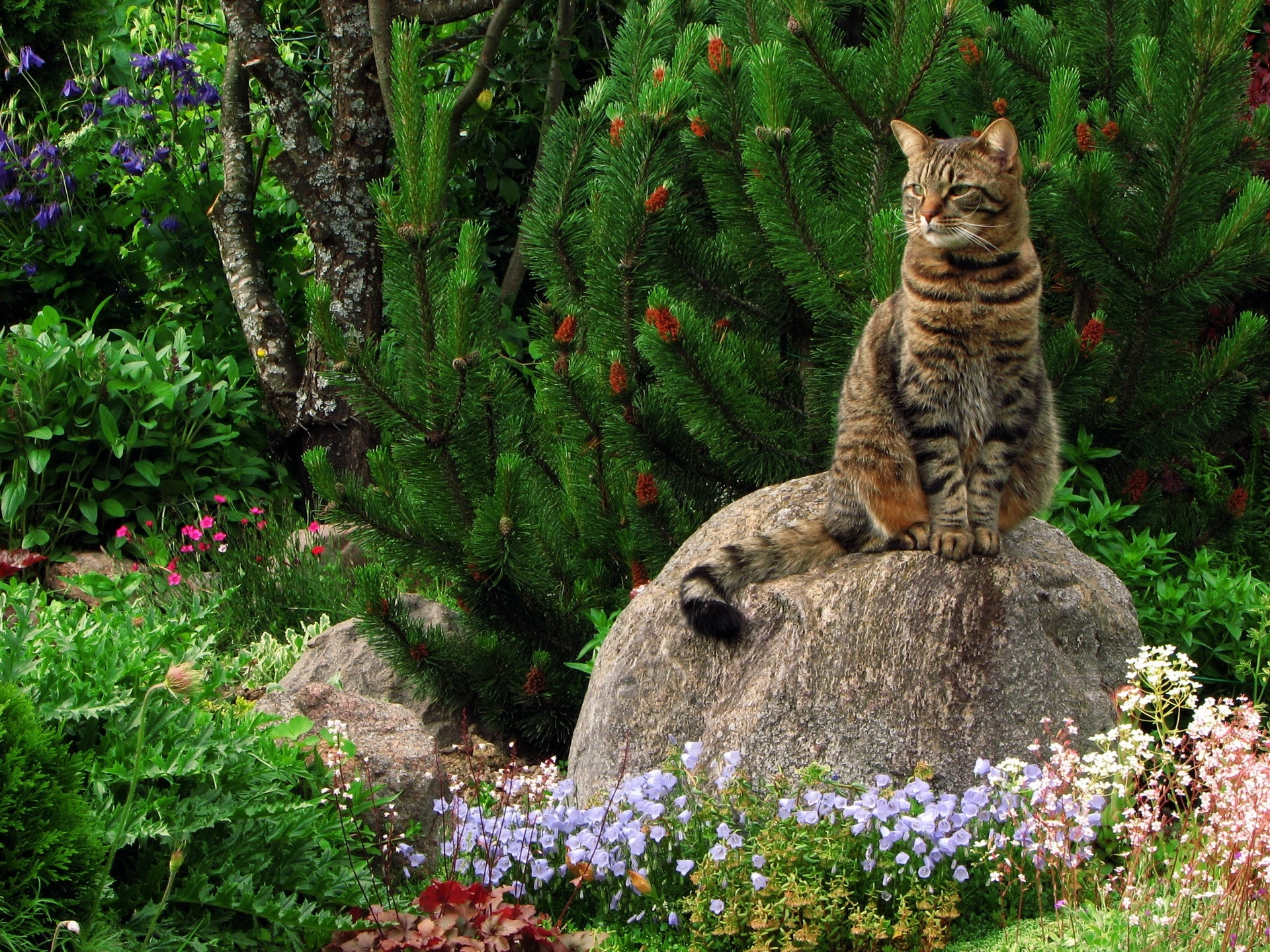113296 Screensavers and Wallpapers Sit for phone. Download Animals, Landscape, Flowers, Grass, Rock, Sit, Cat, Stone, Garden pictures for free