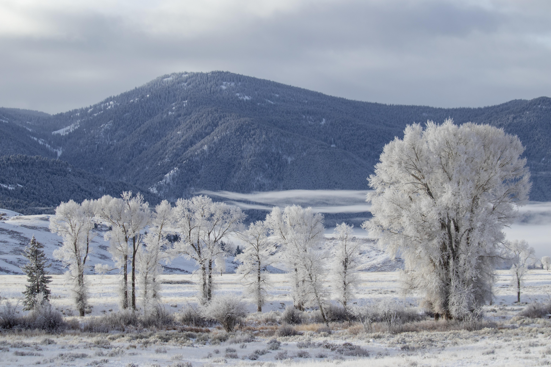 57403 обои 480x800 на телефон бесплатно, скачать картинки Пейзаж, Зима, Природа, Деревья, Снег, Гора 480x800 на мобильный