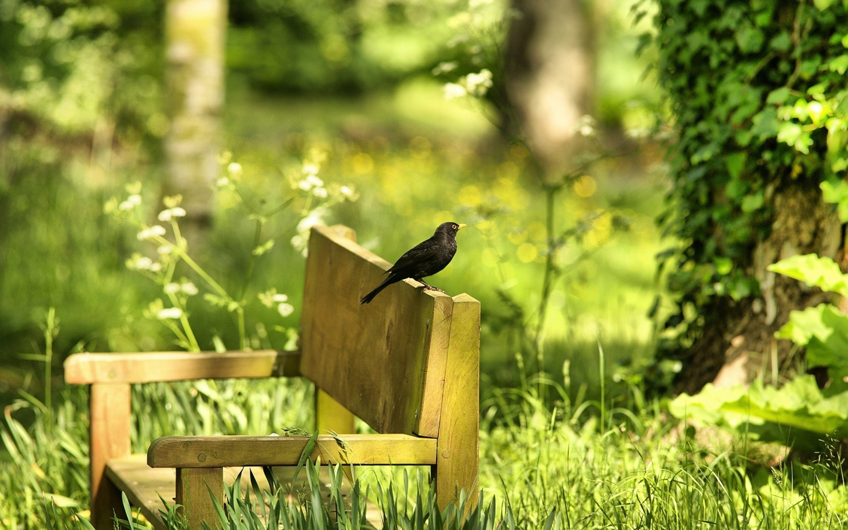 26839 скачать обои Животные, Растения, Птицы, Трава - заставки и картинки бесплатно
