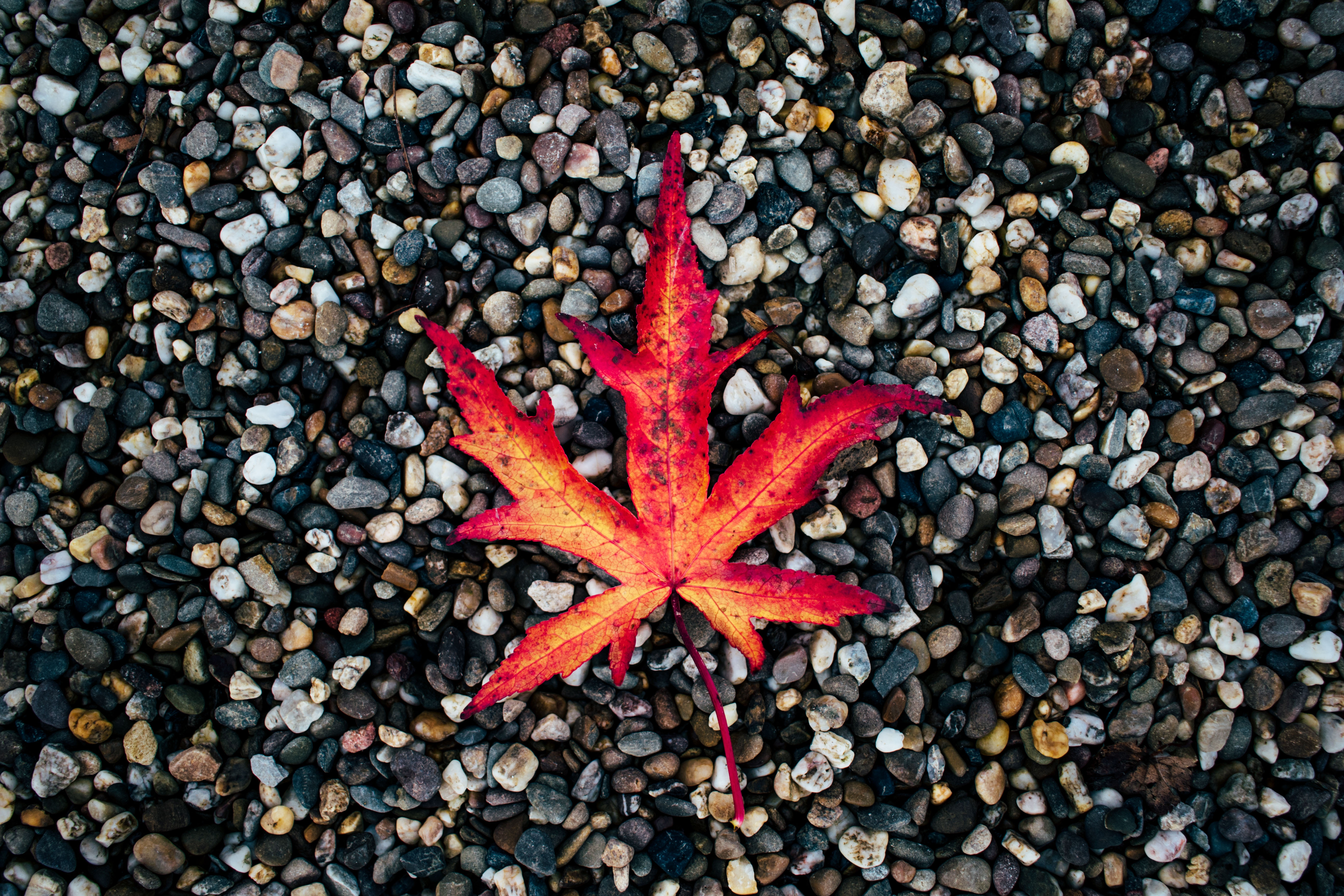 61184 download wallpaper Nature, Sheet, Leaf, Autumn, Stones, Fallen screensavers and pictures for free