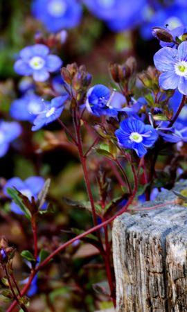 24866 скачать обои Растения, Цветы - заставки и картинки бесплатно