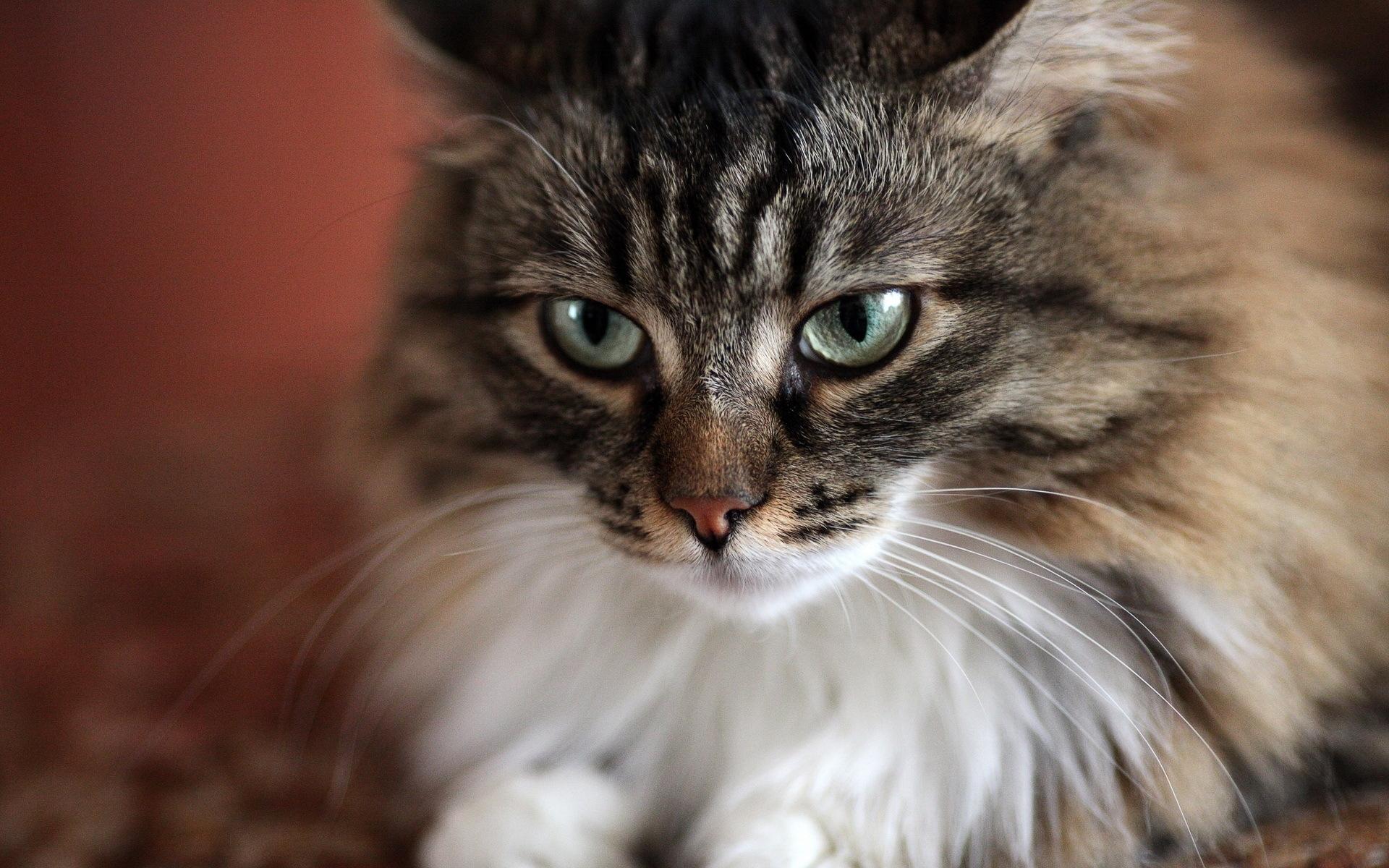 24092 скачать обои Животные, Кошки (Коты, Котики) - заставки и картинки бесплатно