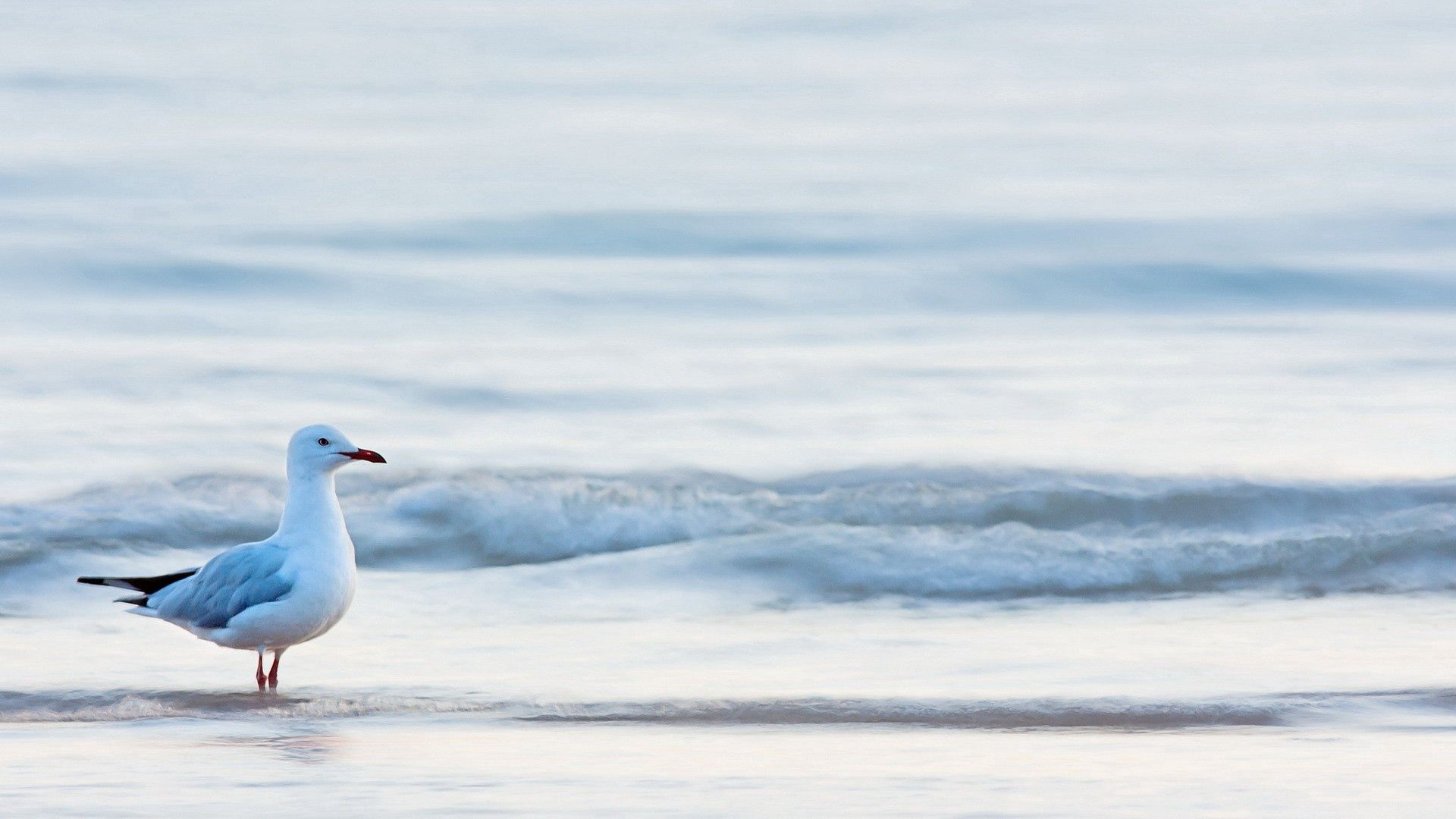 64520 download wallpaper Animals, Gull, Seagull, Bird, Sea, Water screensavers and pictures for free