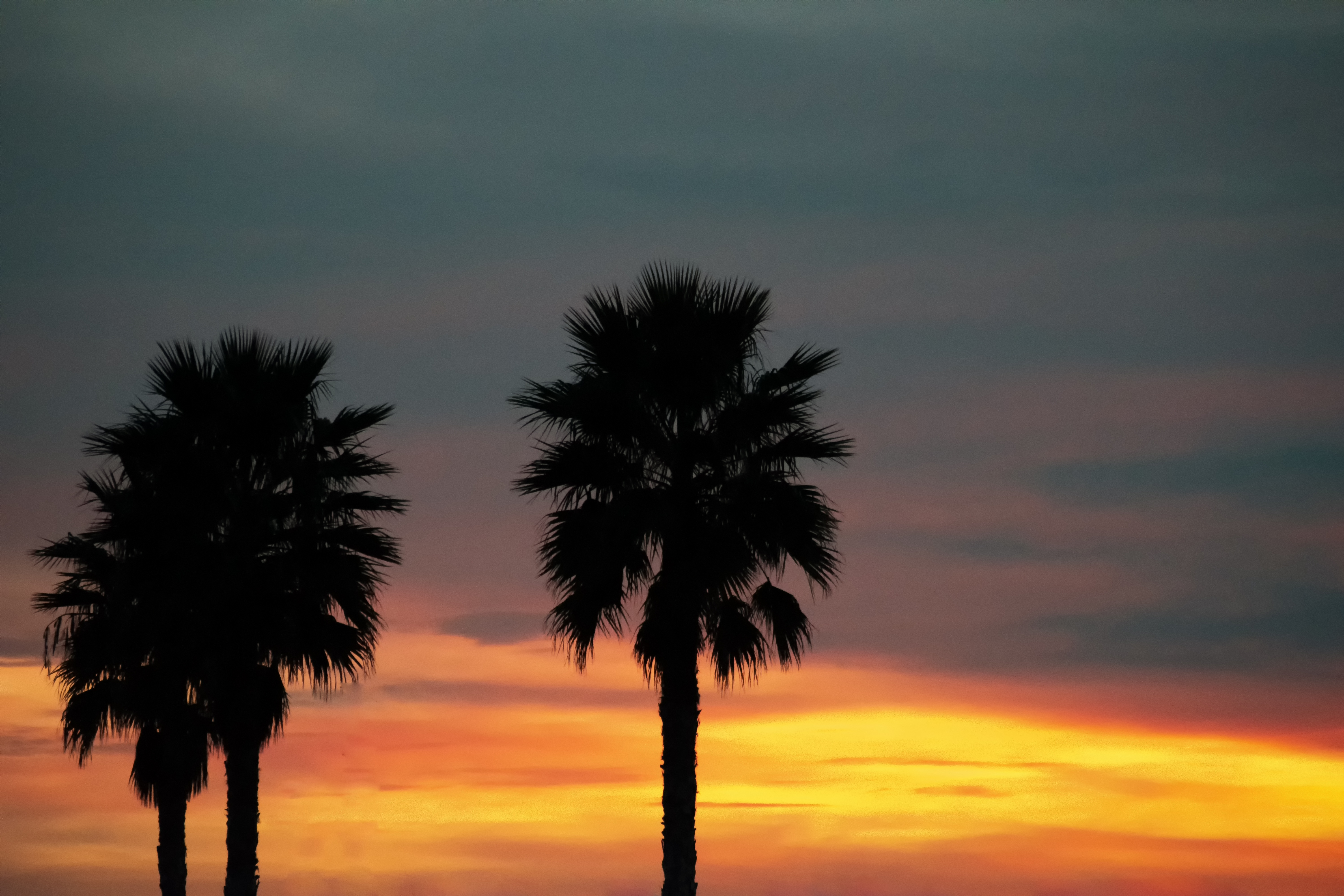 80625 download wallpaper Nature, Palm, Sunset, Sky, Tropics, Palms screensavers and pictures for free
