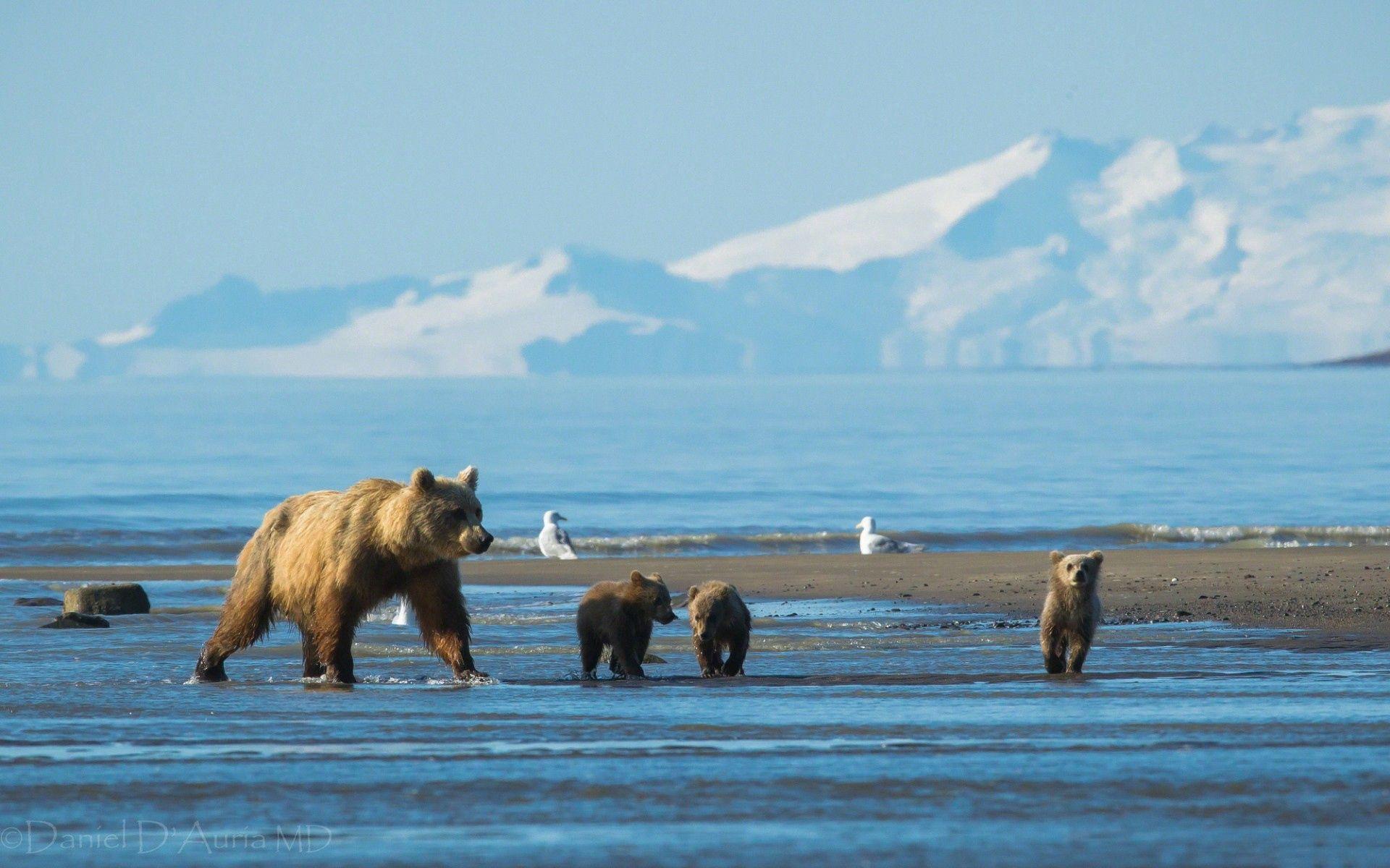 113667 Заставки и Обои Медведи на телефон. Скачать Медведи, Животные, Вода, Горы, Снег картинки бесплатно