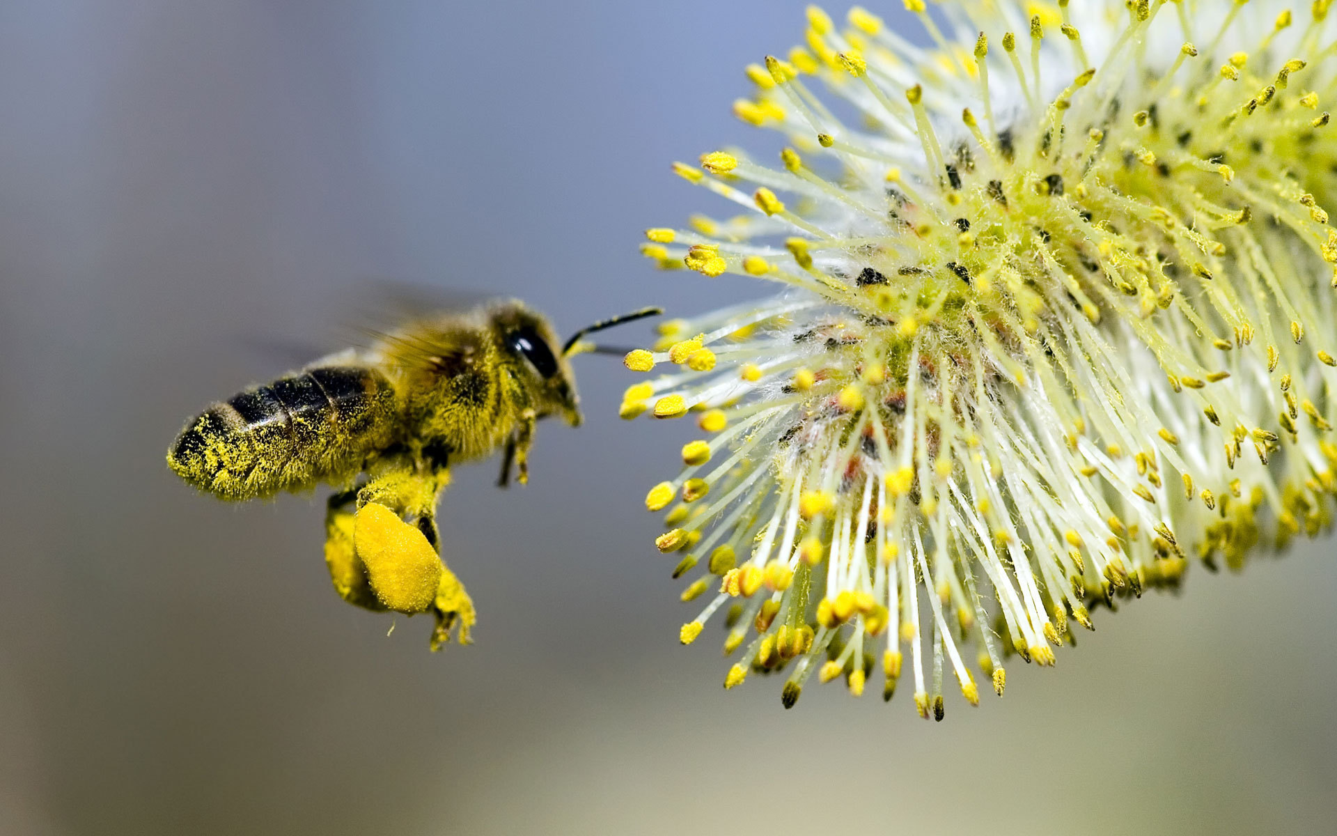 25746 Screensavers and Wallpapers Bees for phone. Download Insects, Bees pictures for free