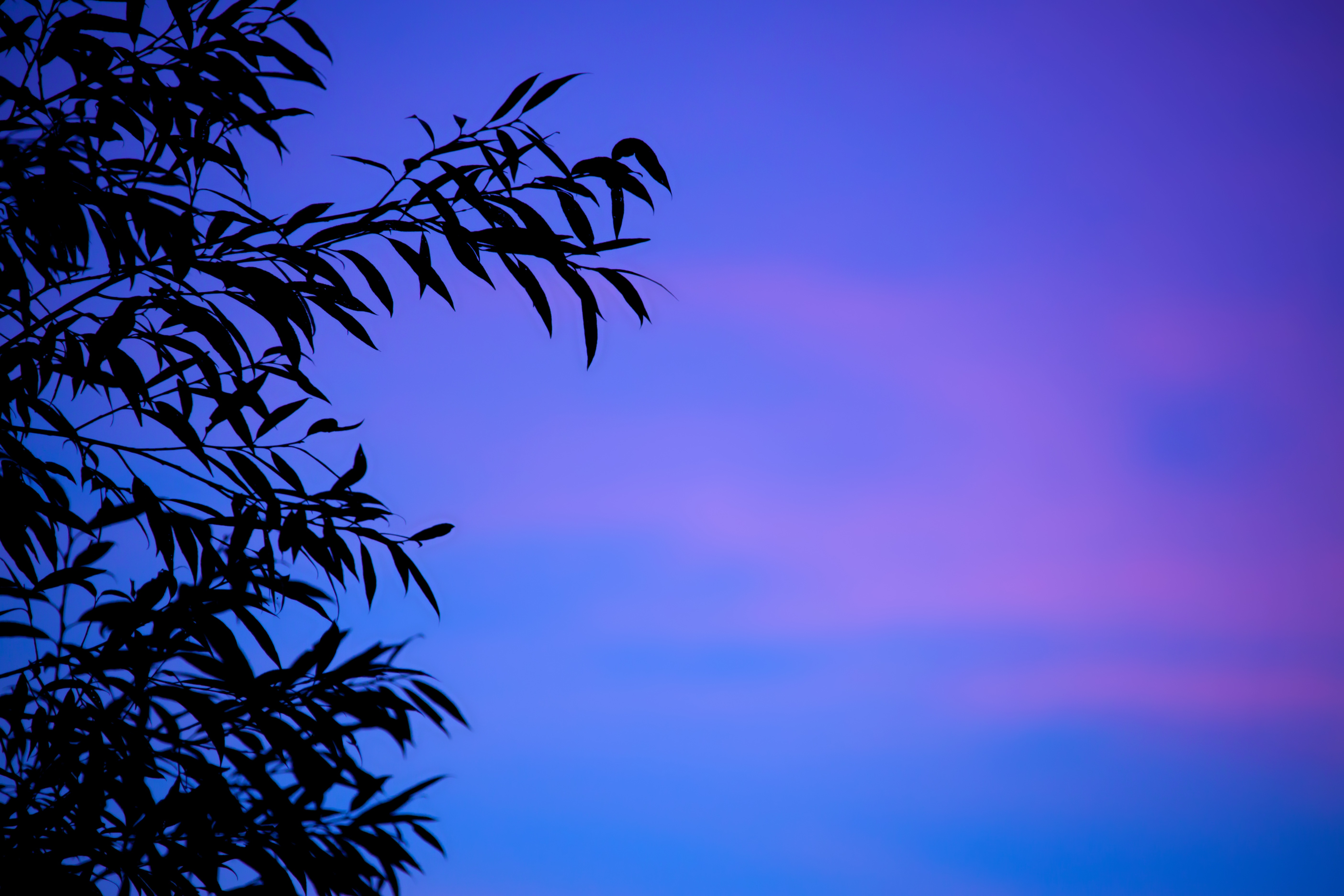 125248 download wallpaper Nature, Branches, Sky, Leaves, Dusk, Twilight, Sunset, Gradient screensavers and pictures for free