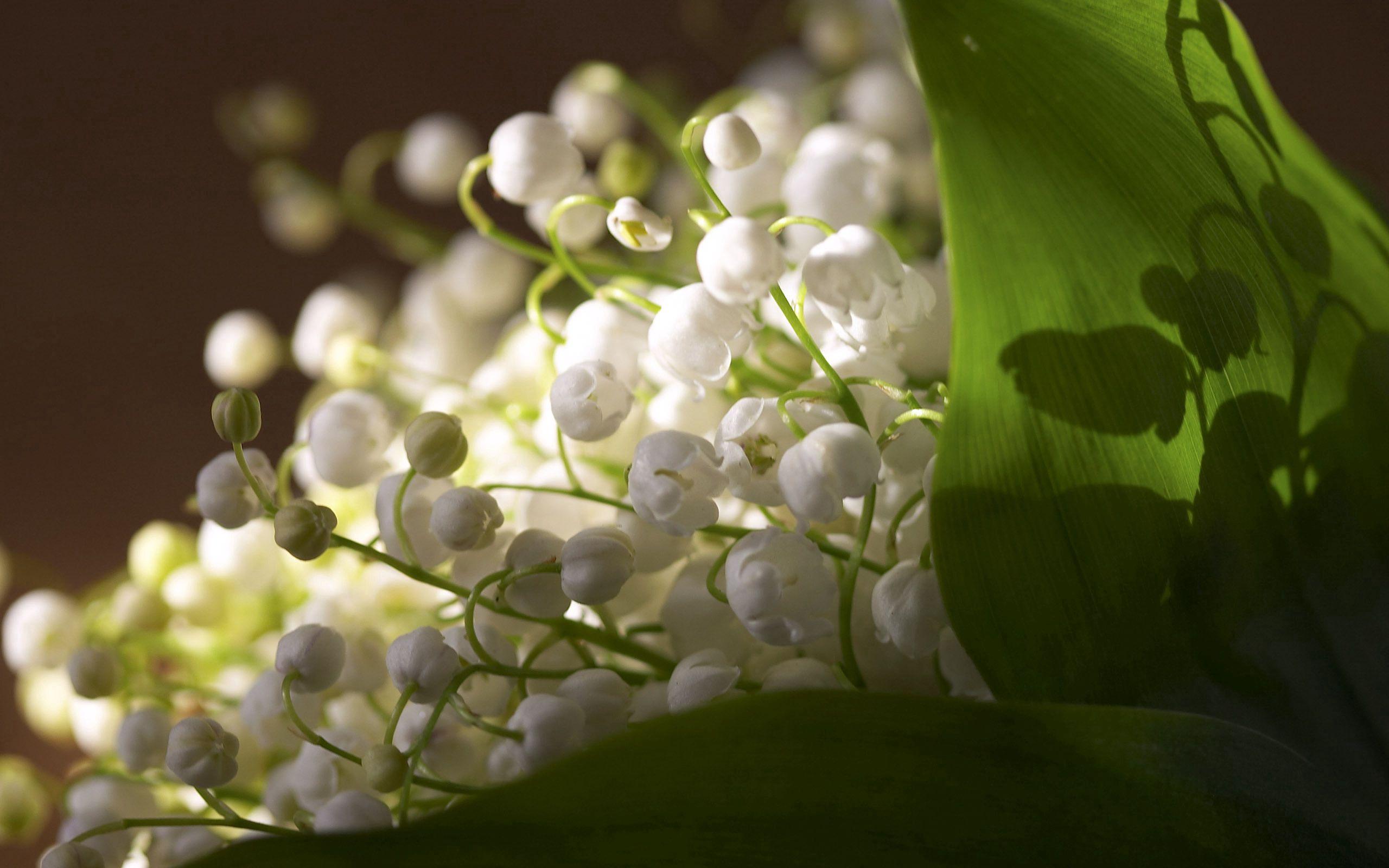 67612 Hintergrundbild herunterladen Blumen, Maiglöckchen, Makro - Bildschirmschoner und Bilder kostenlos