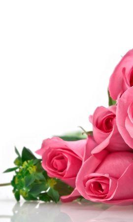 6208 скачать обои Праздники, Растения, Цветы, Розы, 8 Марта - заставки и картинки бесплатно