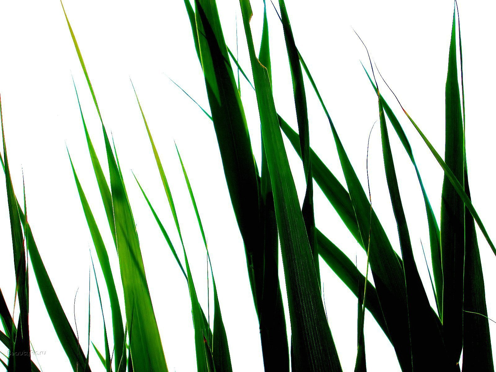 10918 скачать обои Растения, Трава, Фон - заставки и картинки бесплатно