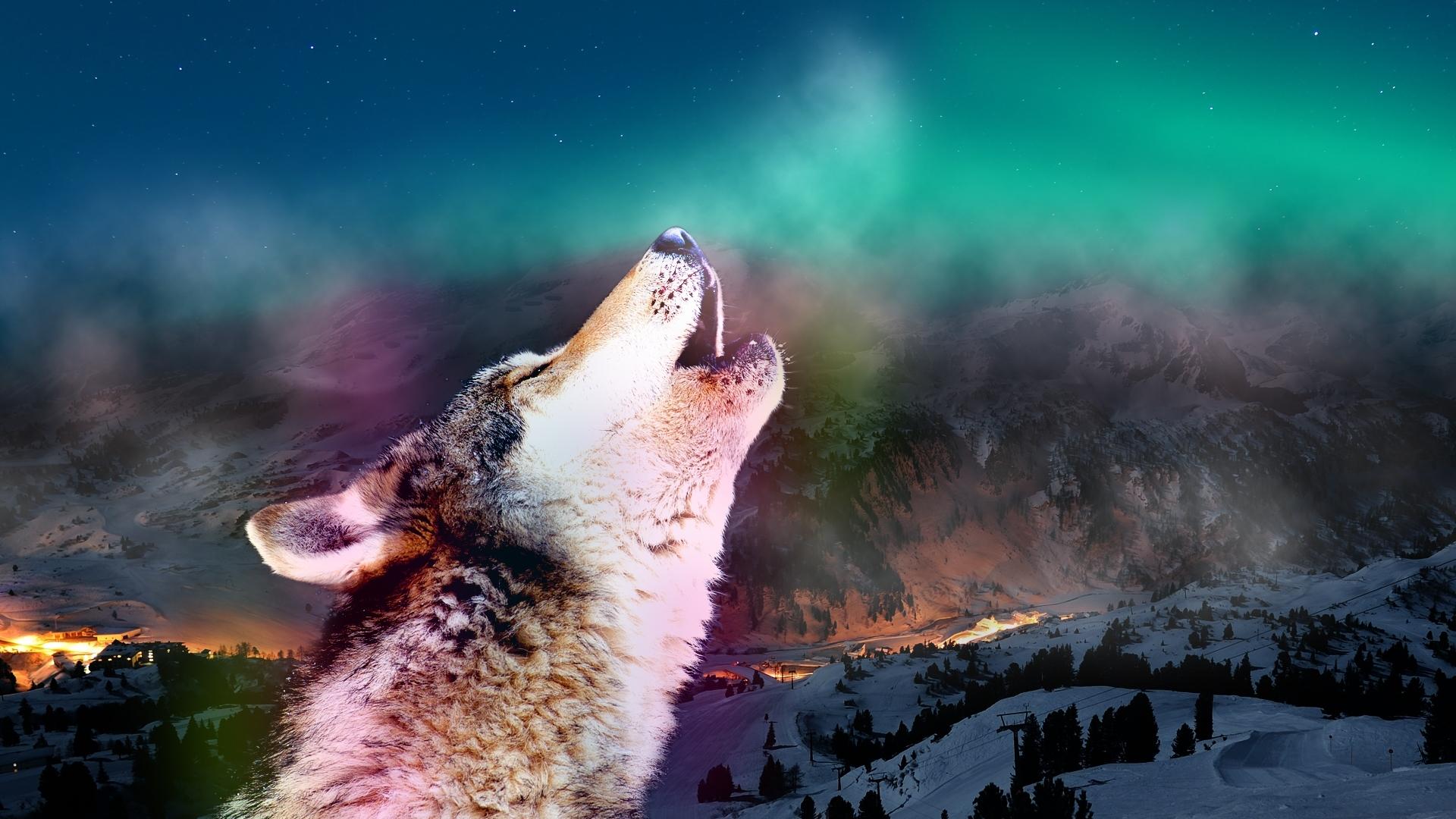 29683 Hintergrundbild herunterladen Tiere, Wölfe - Bildschirmschoner und Bilder kostenlos
