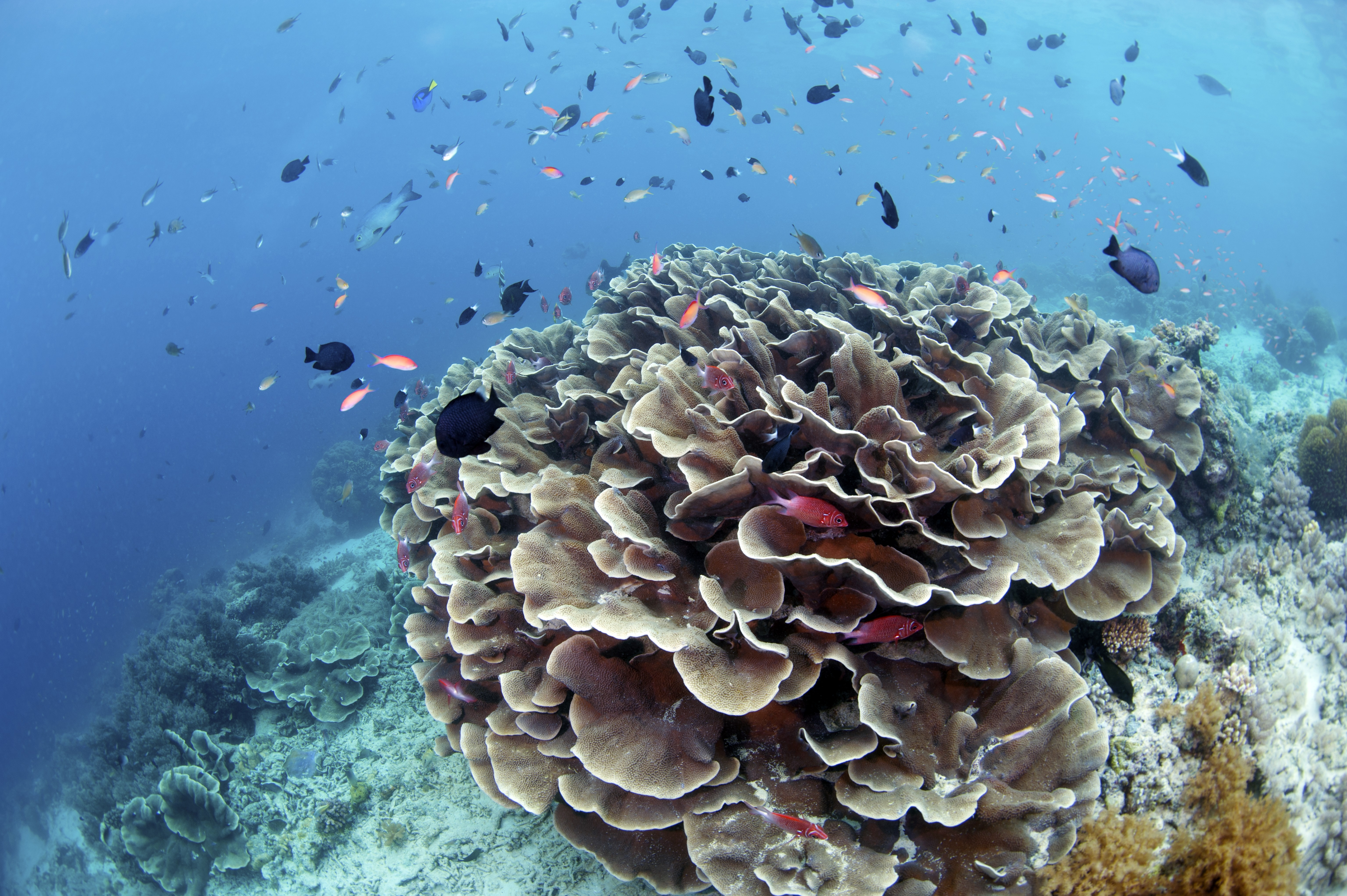 78691 download wallpaper Nature, Reefs, Water, Fishes, Coral screensavers and pictures for free