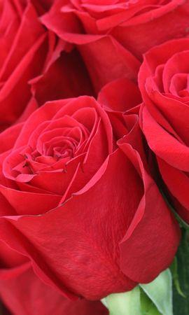 3533 скачать обои Растения, Цветы, Розы - заставки и картинки бесплатно