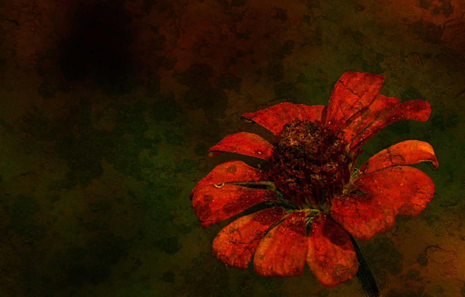 7597 скачать обои Растения, Цветы - заставки и картинки бесплатно