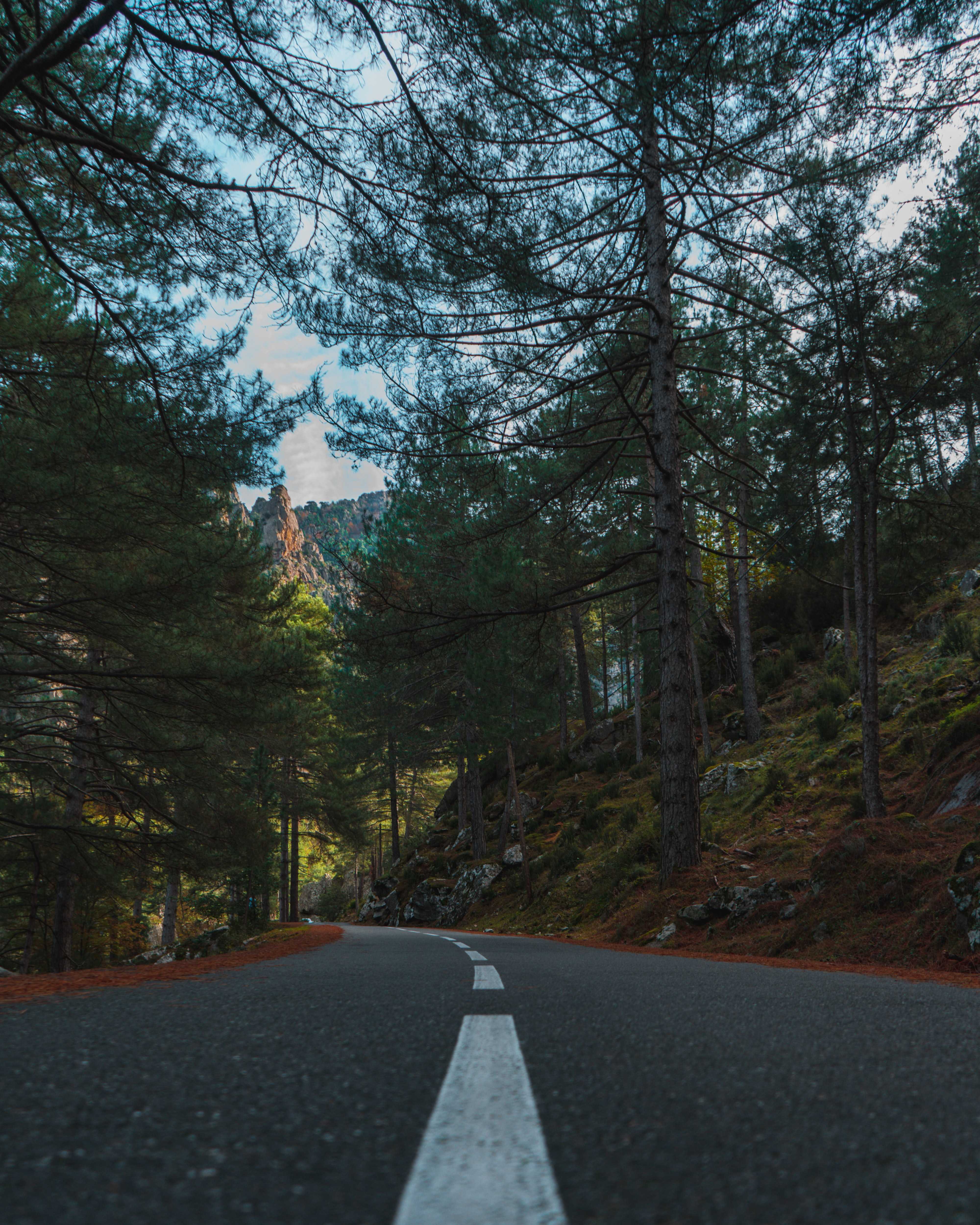 103110 Screensavers and Wallpapers Spruce for phone. Download Nature, Trees, Road, Spruce, Fir, Dahl, Distance pictures for free