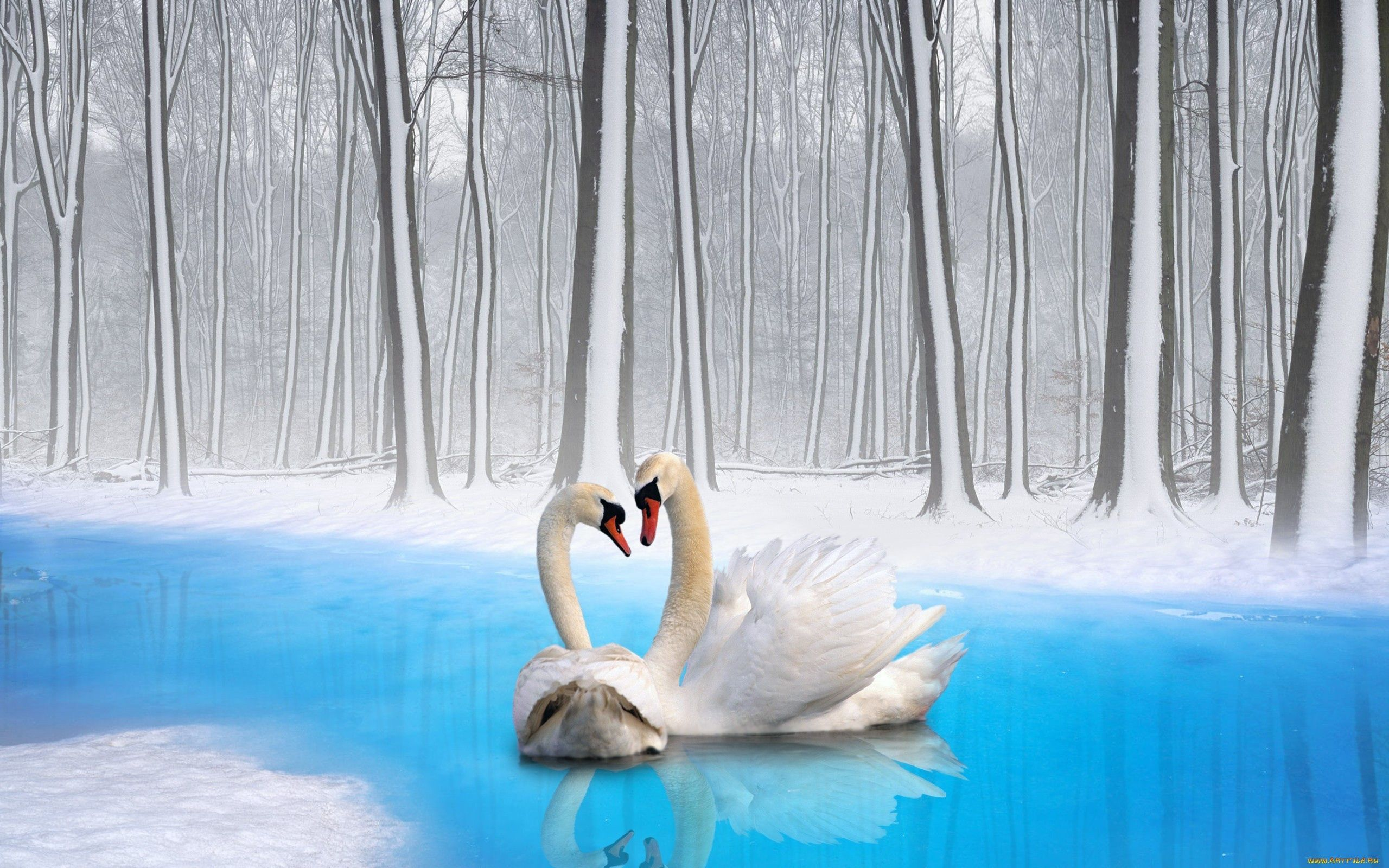 130245 Hintergrundbild herunterladen Tiere, Vögel, Swans, Paar, Treue - Bildschirmschoner und Bilder kostenlos