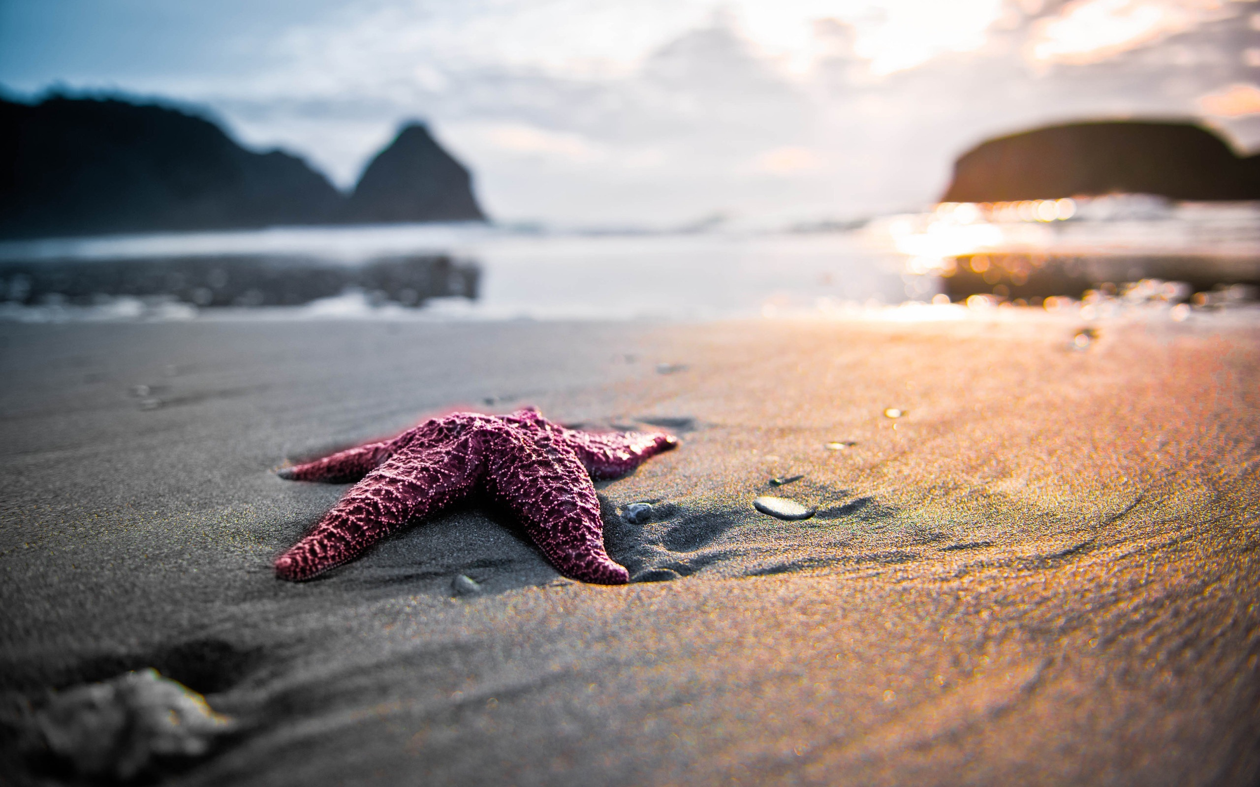 14677 download wallpaper Landscape, Sea, Beach, Starfish screensavers and pictures for free