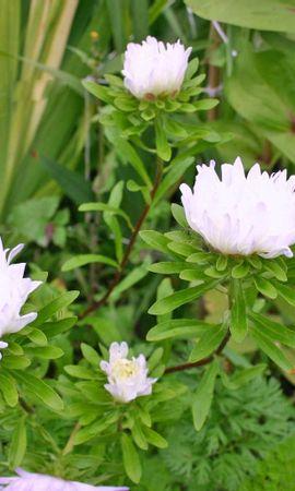 8909 скачать обои Растения, Цветы - заставки и картинки бесплатно