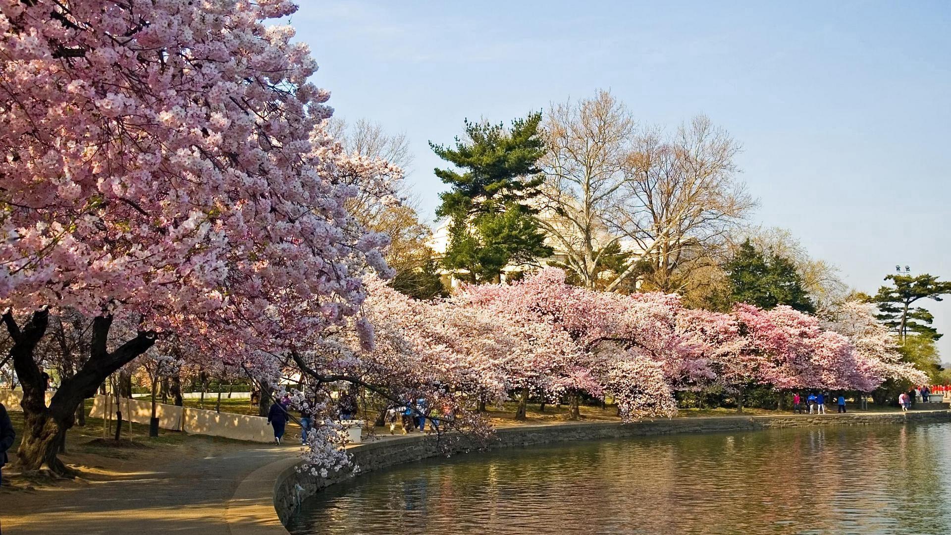 73873壁紙のダウンロード自然, 公園, 木, 春, 池-スクリーンセーバーと写真を無料で